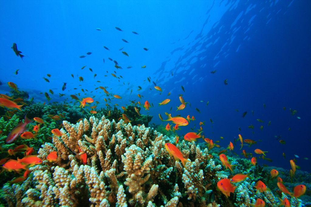 Experience Sealife in The Maldives