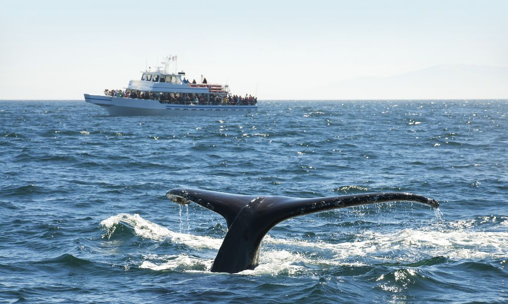 Whale watching_97860107