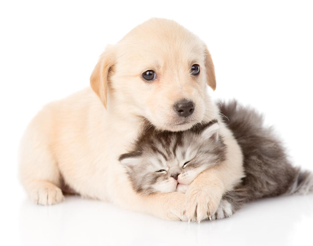 cats and puppies_187206578