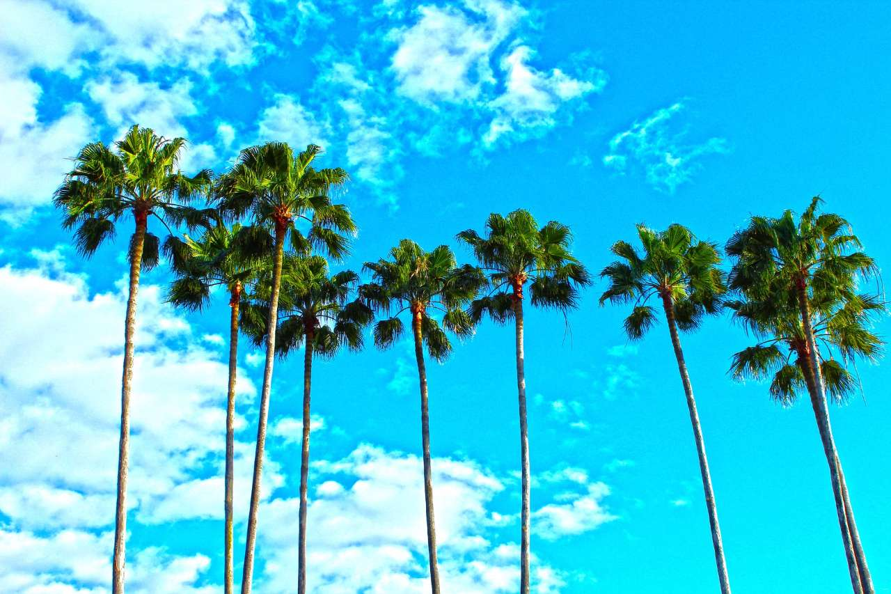 palm-trees-1277243_1920