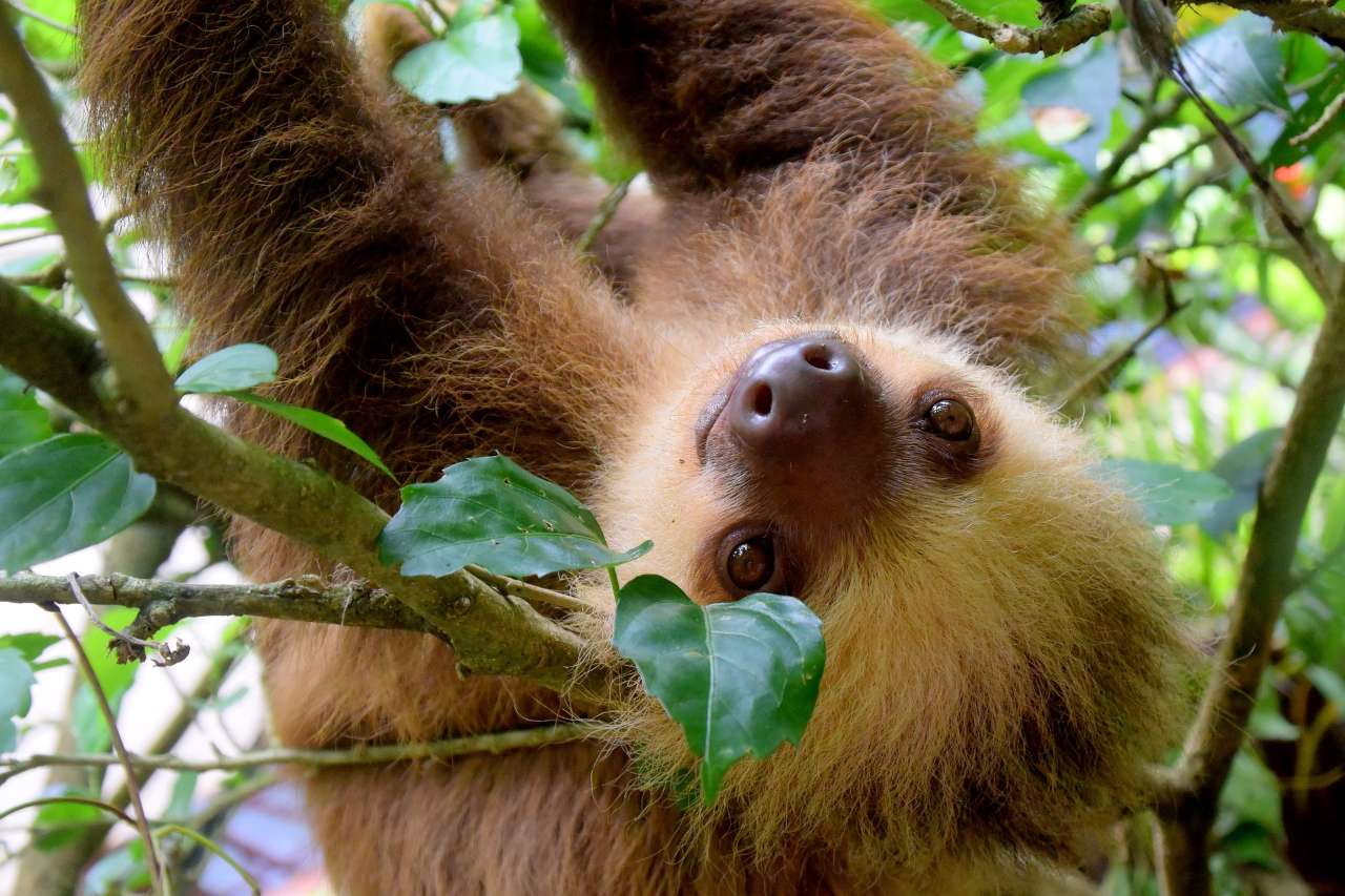 A Guide To The Ecosystems And Wildlife of Costa Rica