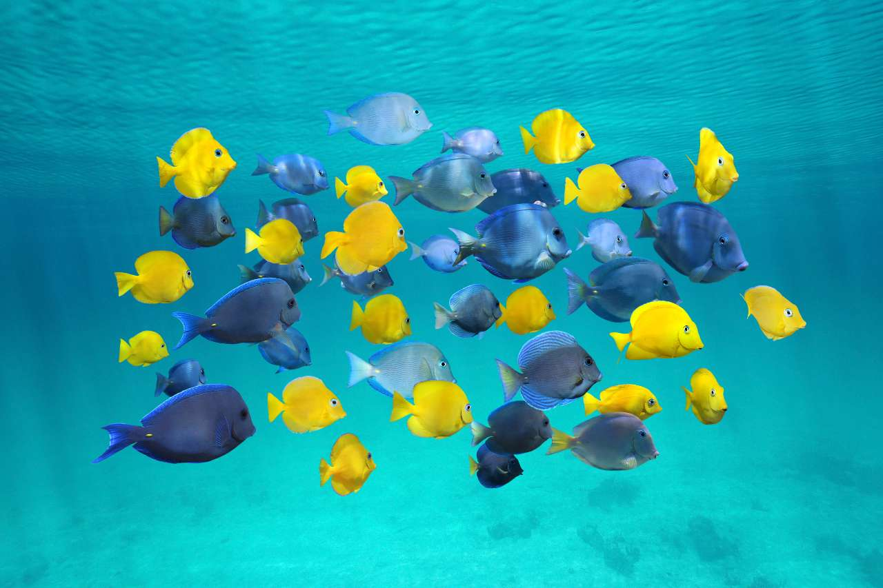 A Guide to the Sea Life of the Dominican Republic
