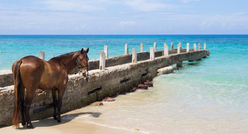 Horse on the beach at Runaway Bay