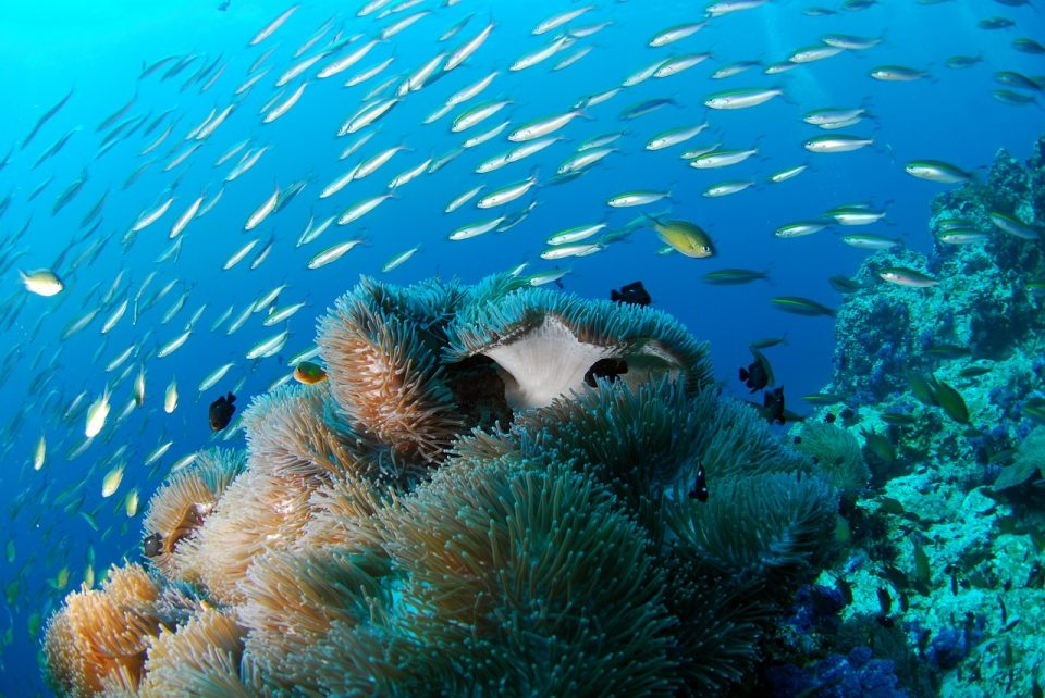 fish and reef scuba diving
