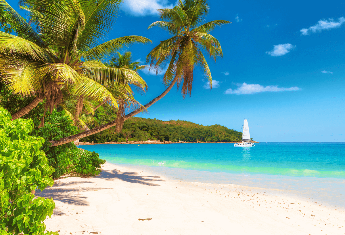 Palm trees swaying over beach in Jamaica